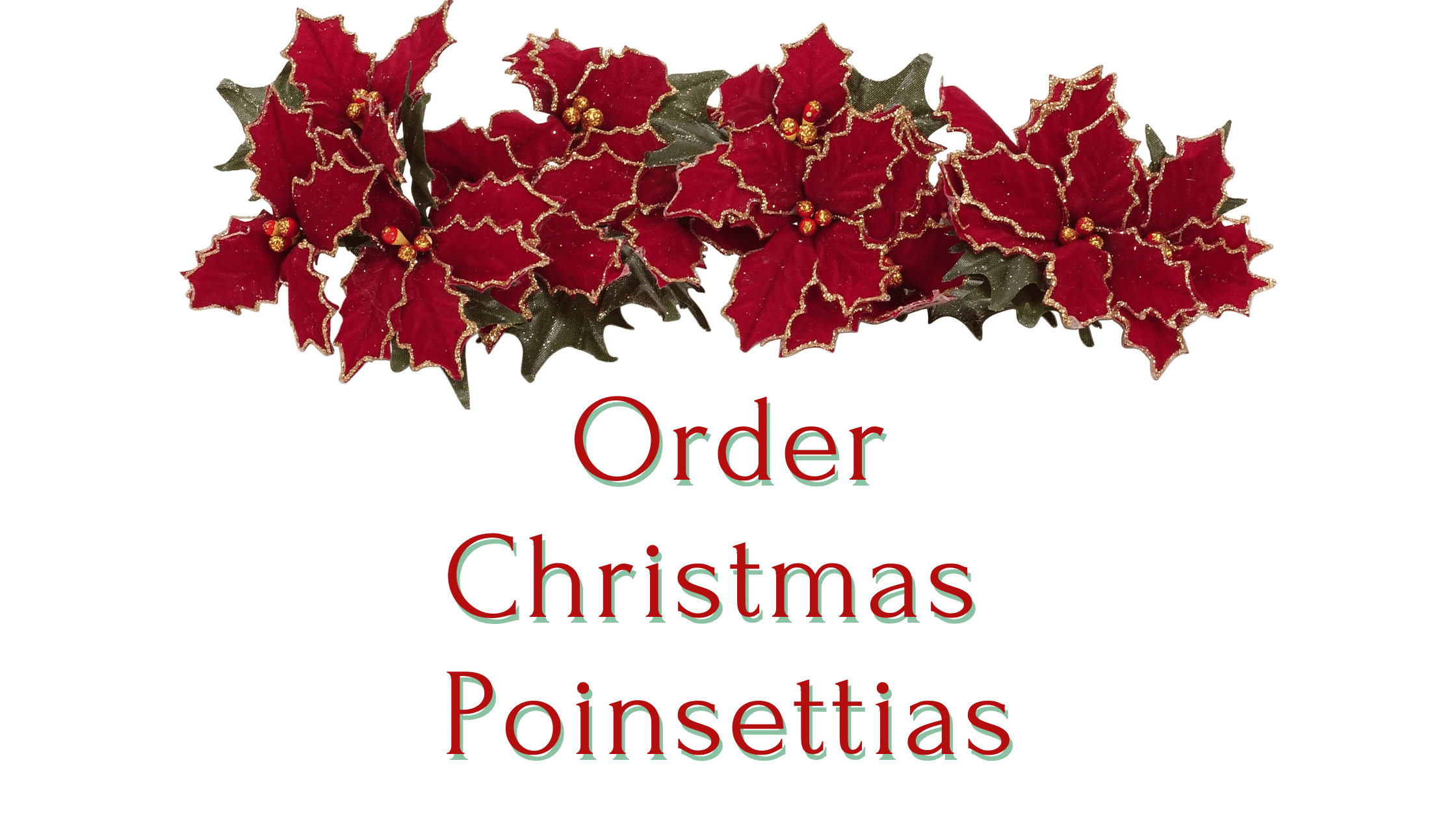 Order Christmas Poinsettias.png